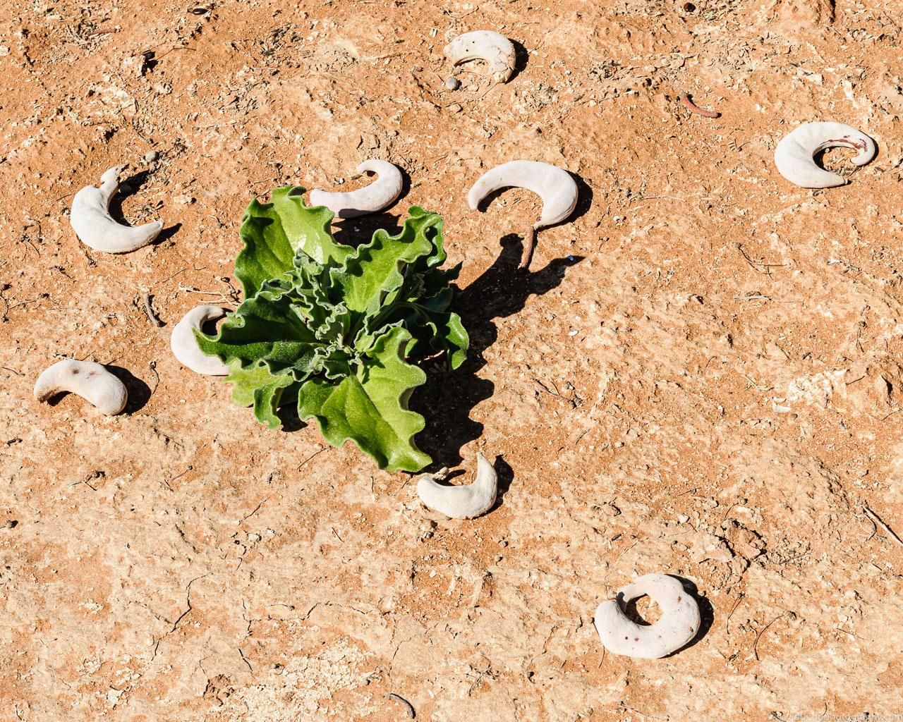 DBP__201106__namibia__262.jpg