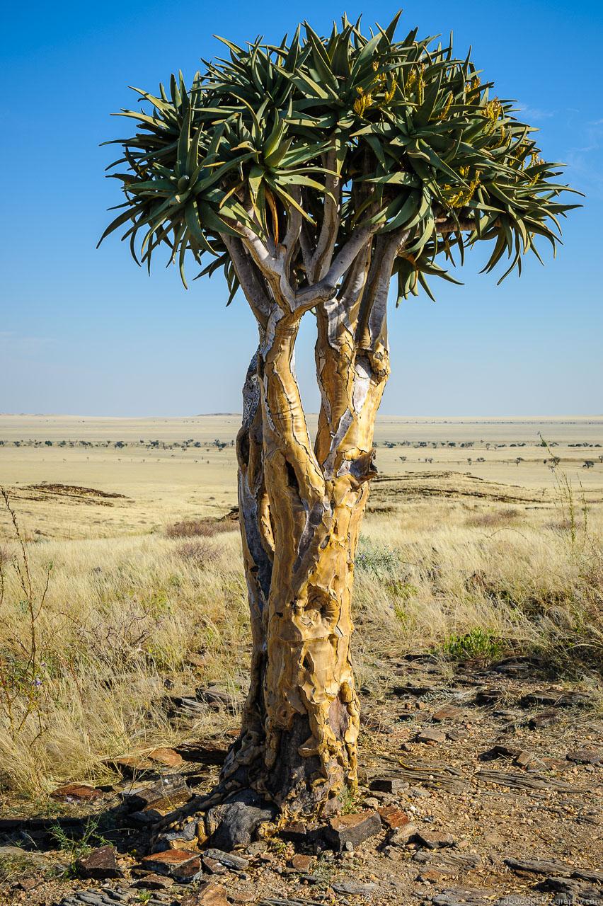 DBP__201106__namibia__386.jpg